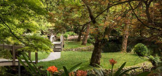 Alfred Nicholas Gardens - Dandenong Ranges