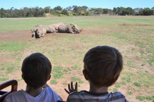 werribee-zoo-safari-mums-little-explorers