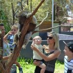 Zoos in Melbourne: Fun family days out