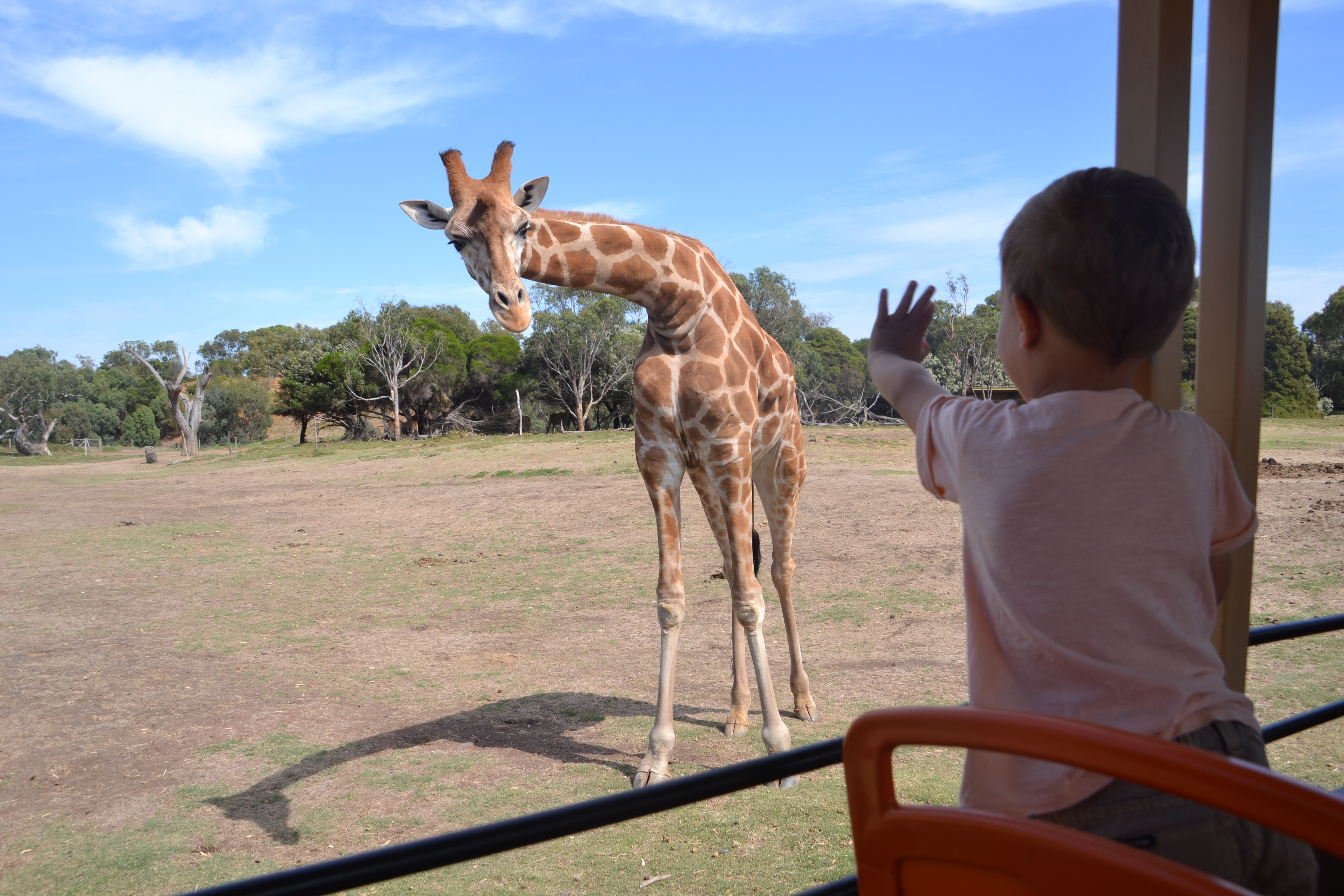 werribee-zoo-safari-mums-little-explorers