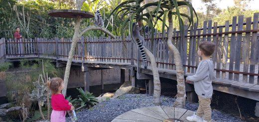 melbourne-zoo-meerkats
