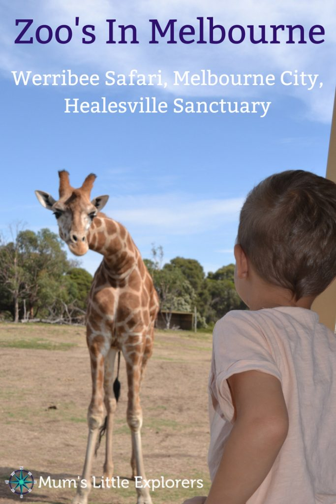 Activities in Melbourne for Kids - Melbourne Zoos