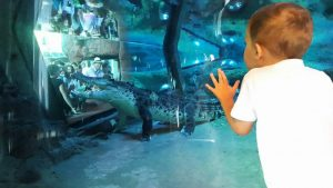 Sea Life Melbourne Aquarium Kids Activities