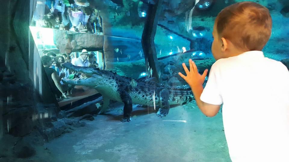 Sea Life Melbourne Aquarium Kids Activities
