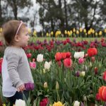 Children's Week at Tesselaar Tulip Festival Melbourne 2019