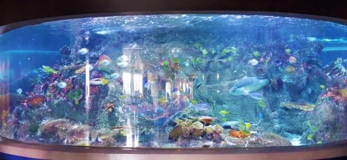 Sealife Melbourne Aquarium - Kids Activities