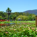 Blue Lotus Water Garden, A Family Paradise Outside Melbourne in the Yarra Valley