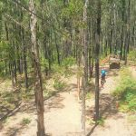 KingLake Forest Adventures, Outdoor Climbing for Kids in Melbourne