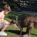 Ballarat Wildlife Park, Get Up close to Native Australian Animals