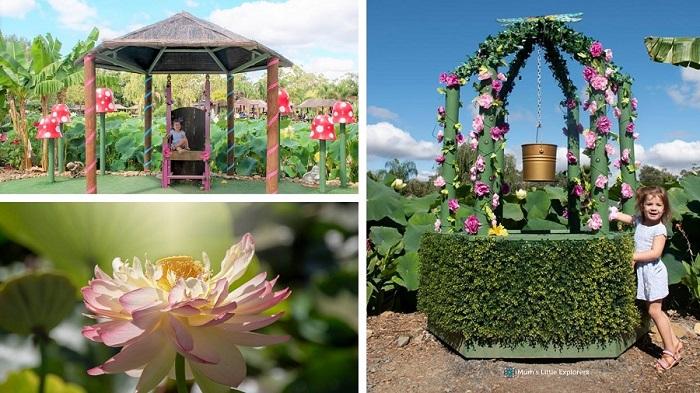 Lotus Flower Garden Yarra Valley