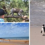 Phillip Island for Kids and Families: More than just the penguin parade
