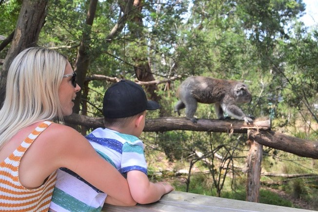 Koala Conservation Centre: Phillip Island with Kids