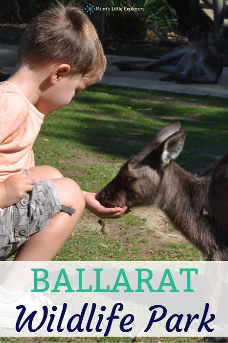 Ballarat Wildlife Park - Feed the Kangaroos