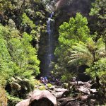 5 Must See Waterfalls Near Melbourne, Victoria