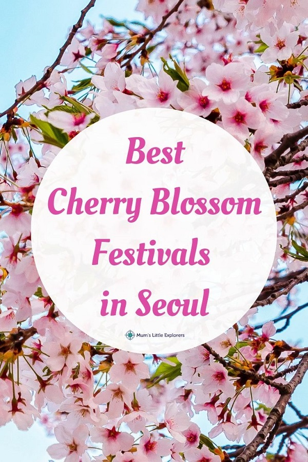 Cherry Blossom Festivals in Seoul