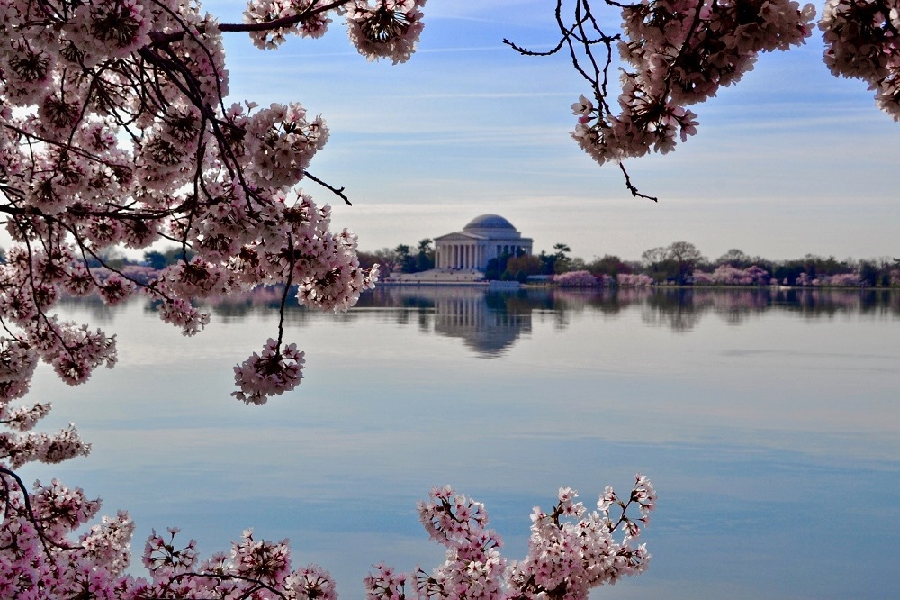 Tidal Basin and Cherry Blossom Festival