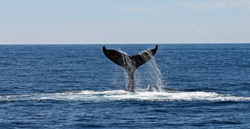 Whale Watching in Warrnambool