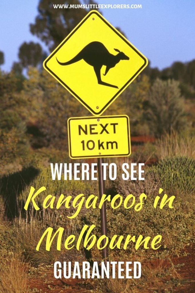 Best places to see kangaroos in melbourne guaranteed
