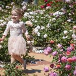 State & Rose Garden Show |  FREE Family Event at Werribee Park