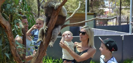 Healesville Sanctuary - Things to do in Melbourne with Kids