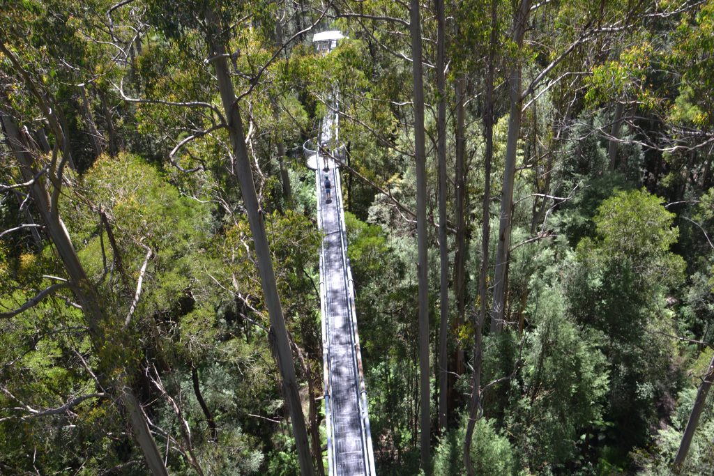 Otway Fly - Things to do in Melbourne with Kids