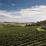 12 Things To Do In The Yarra Valley, Victoria