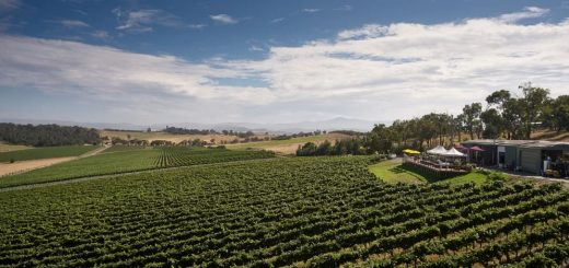 Things to do in Yarra Valley - Day trip from Melbourne