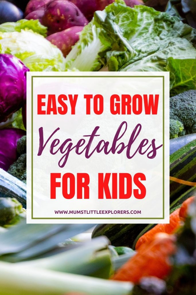 Easy to Grow Vegetables for Kids