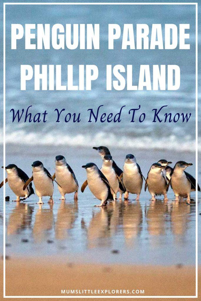 Phillip Island Penguin Parade Tips