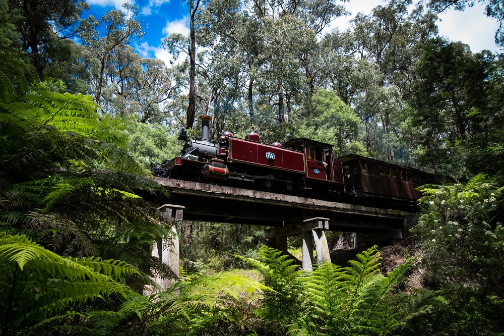 Puffing Billy Dandenong Ranges Day Trip