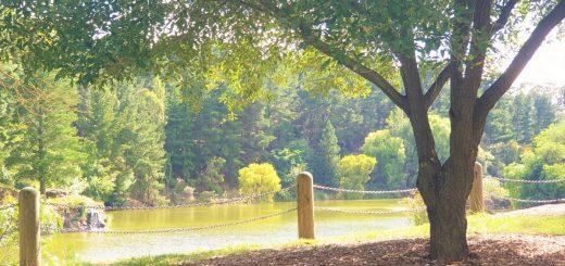 Wilson Botanic Gardens