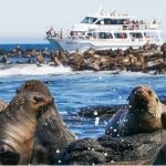 Seal Watching Cruise, Phillip Island Wildlife Cruises