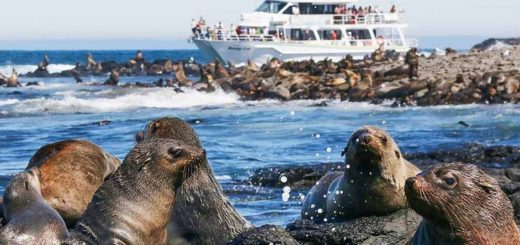 Seal Watching Cruise Phillip Island