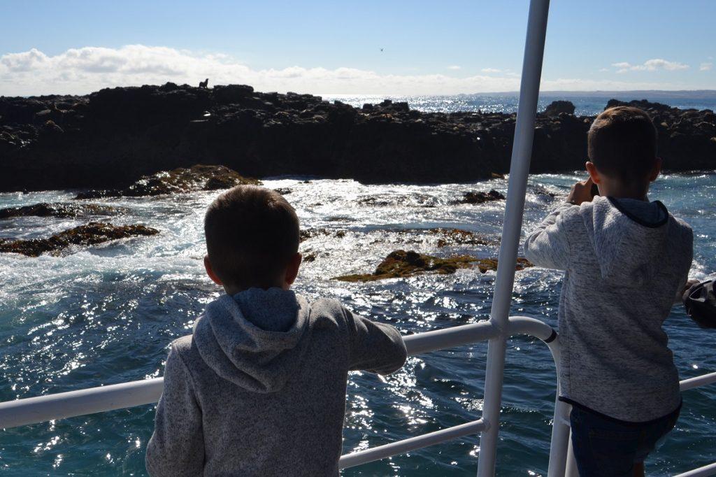 Seal Watching Seal Rocks