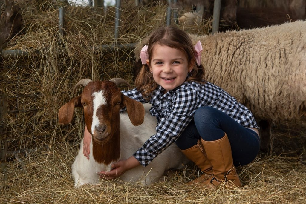 Chesterfield Farm Cuddling animals