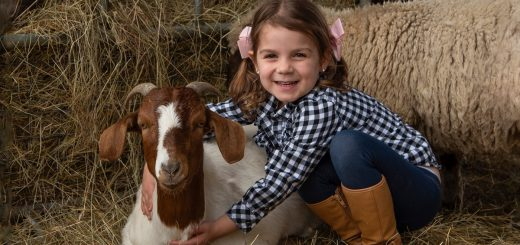 Chesterfield Farm Cuddling animals