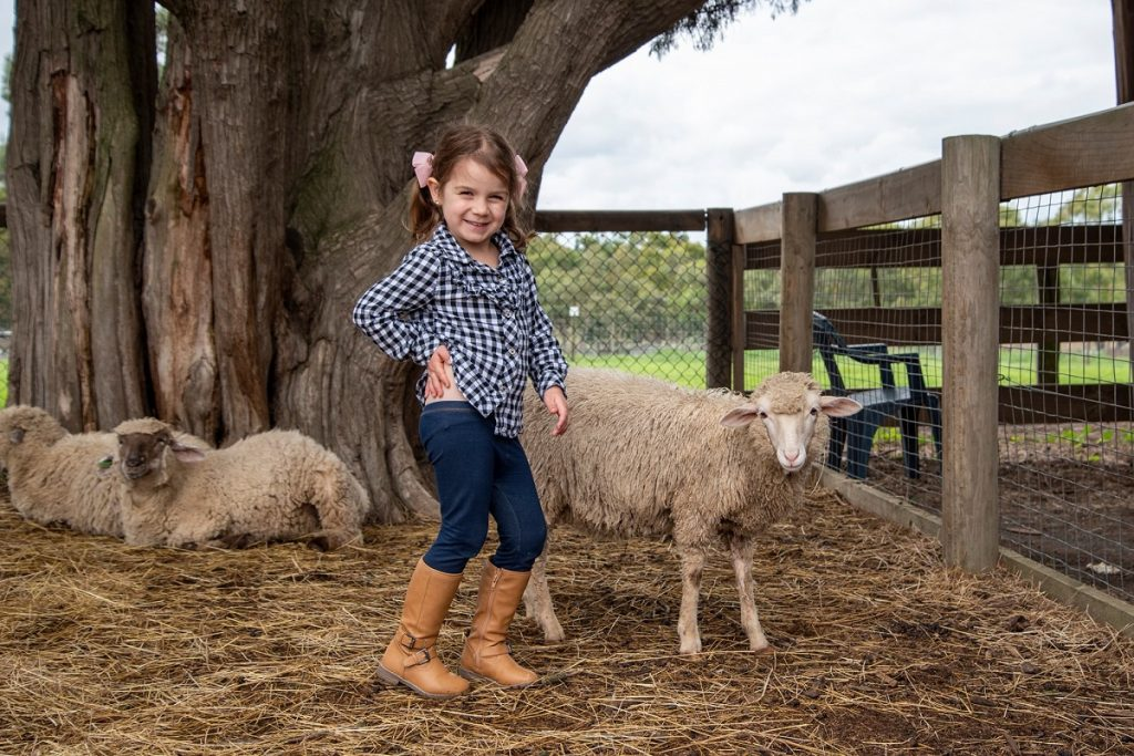 Chesterfield Farm - Animal Farm Melbourne
