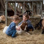 Best Animal Farms in Melbourne for Kids