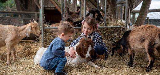 Animal Farms in Melbourne Victoria