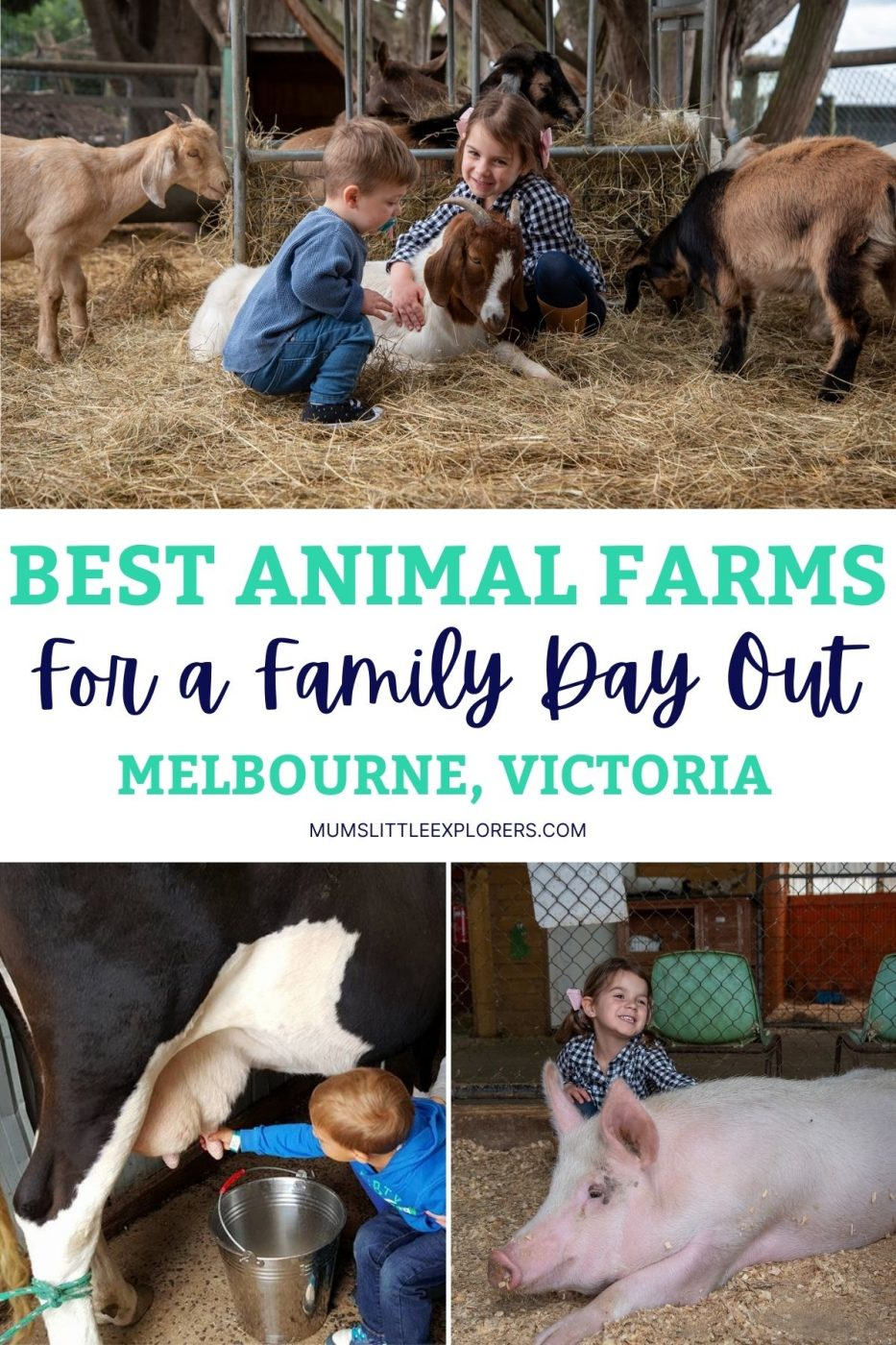 Best Animal Farms in Melbourne Victoria