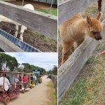 Myuna Farm Doverton – Animal Farm for Kids