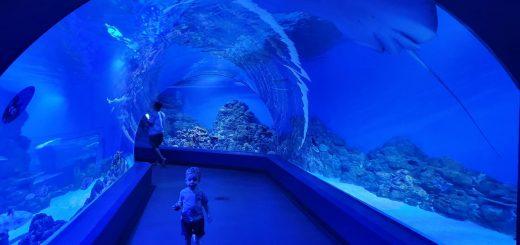 Cairns Aquarium Tunnel