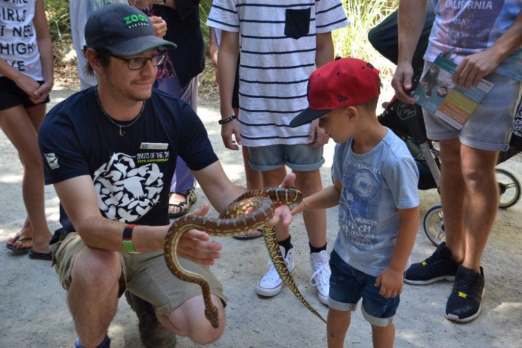 Healesville Sanctuary Animal Close up
