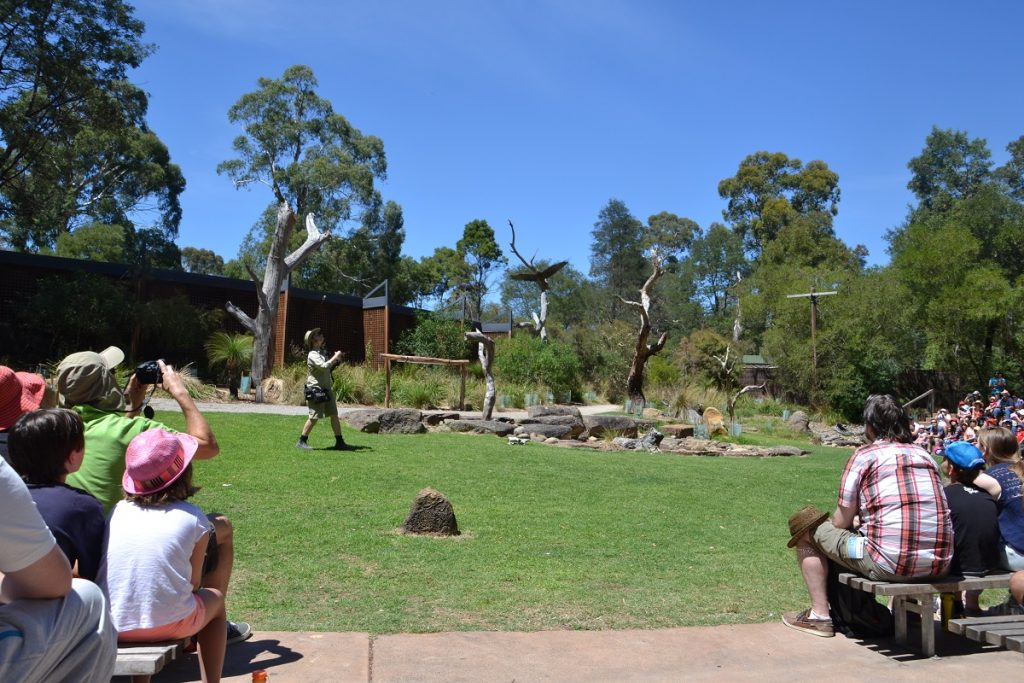 Healesville Sanctuary Bird Show