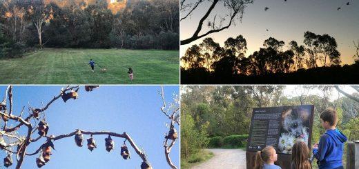 Yarra Bend Park Flying Foxes Melbourne