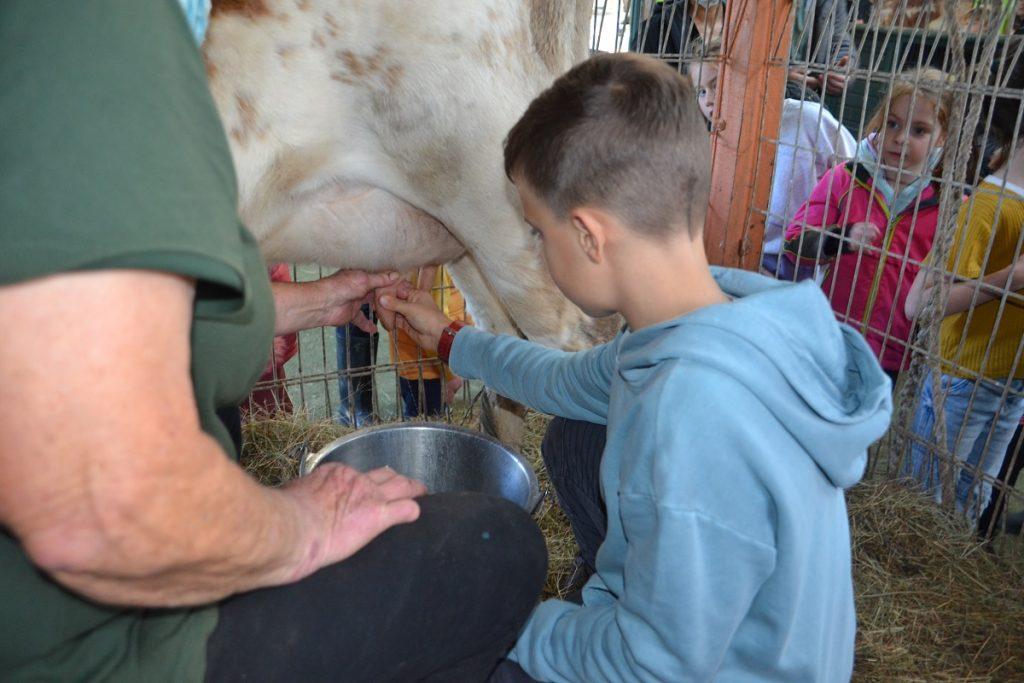 Milking Cows Rain Hayne Shine Farmyard