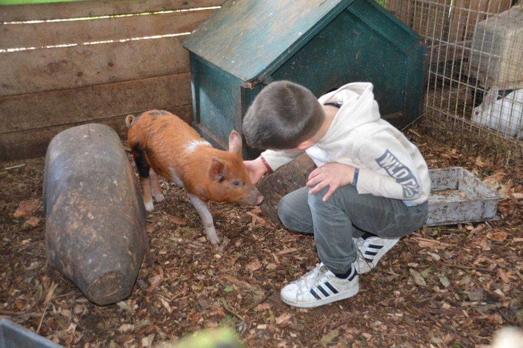 Piglets at the Rain Hayne & Shine Farm