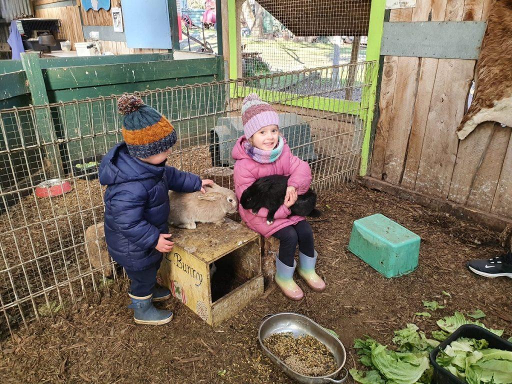 patting animals at the farm