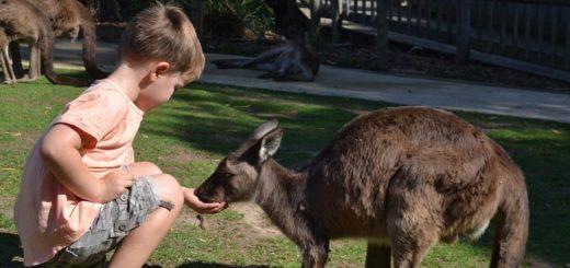 Best wildlife parks in Melbourne