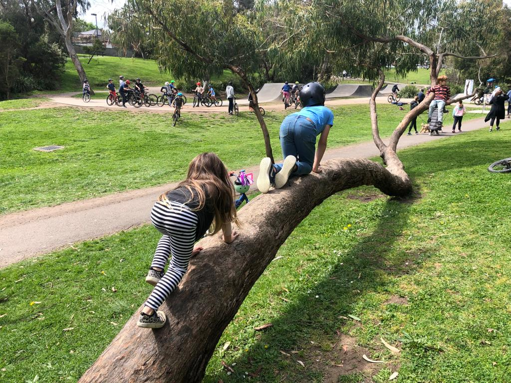 Hill n Dale Bike Track Climbing Trees